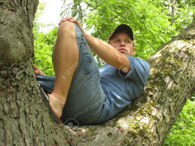 1187164-Young-Man-sitting-in-a-tree-relaxing--Stock-Photo